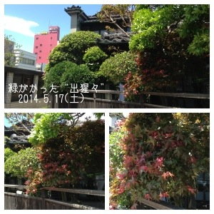 20140620-201732.jpg